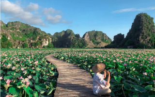 Mùa hoa sen nở rộ tại Ninh Bình