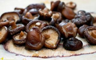 Sai lầm khi ăn nấm hương gây ngộ độc, ảnh hưởng sức khỏe