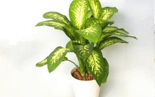 6 loài cây đẹp nhưng cực hại, chớ dại trồng trong nhà kẻo rước bệnh vào người